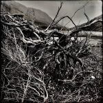 Twists and Turns of Life are to be Found in our Roots